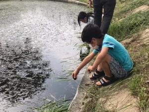 草刈り+池PJ_210626_6
